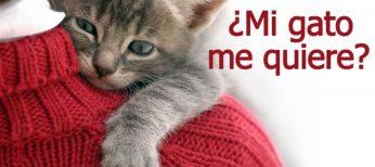 Cómo saber si mi gato me quiere con estas 8 señales