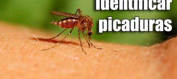 Cómo identificar una picadura y saber qué insecto es - Los 8 más comunes
