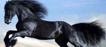 El champú de caballo con biotina, otro producto milagro cuyas propiedades son falsas