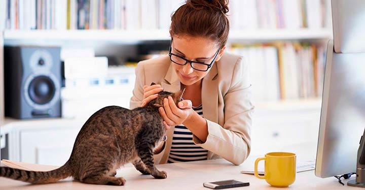 Cómo comunicarte con tu gato-1