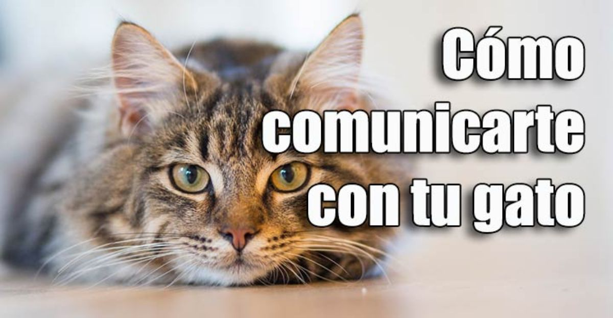 Cómo comunicarte con tu gato