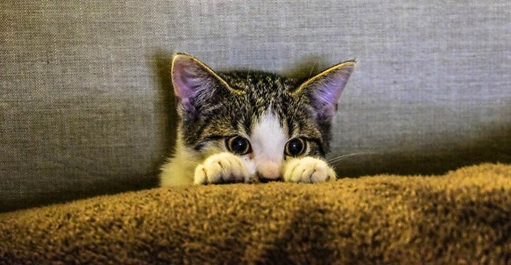 Cómo encontrar a un gato perdido-1