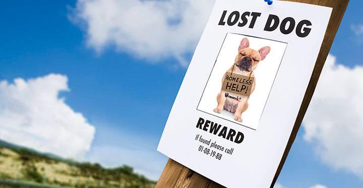 Cómo encontrar a un perro perdido-1