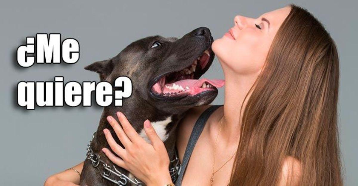 Cómo saber si mi perro me quiere