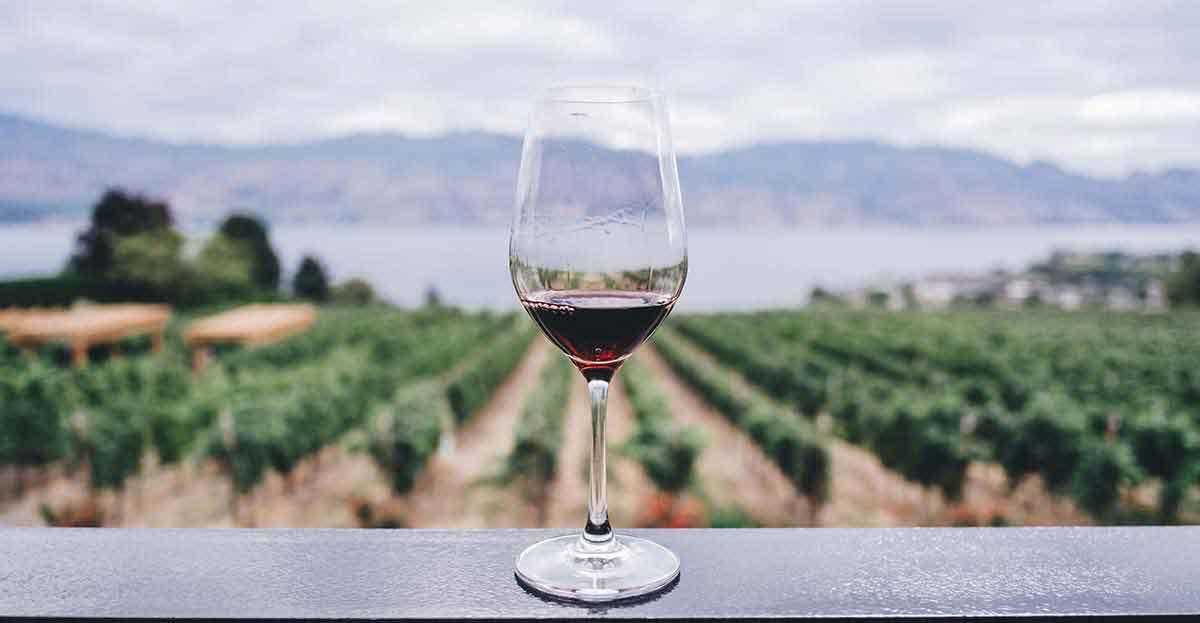 Copa de vino delante de unas viñas.