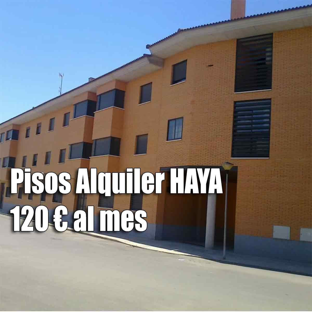 144 pisos de Haya Inmobiliaria desde 120 euros al mes de alquiler