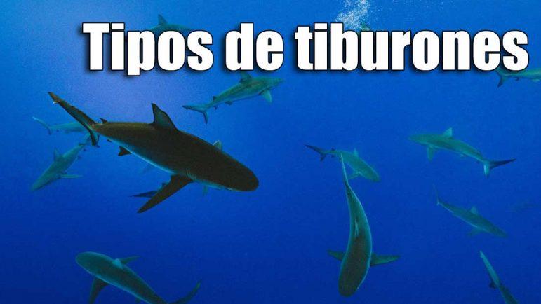 Tipos de tiburones en España