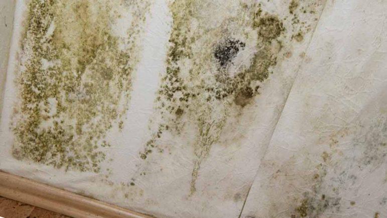 Cómo quitar las humedades de las paredes de casa