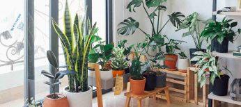Cómo eliminar las plagas de insectos de tus plantas