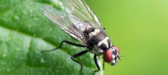 6 remedios naturales para ahuyentar a las moscas para siempre de tu casa