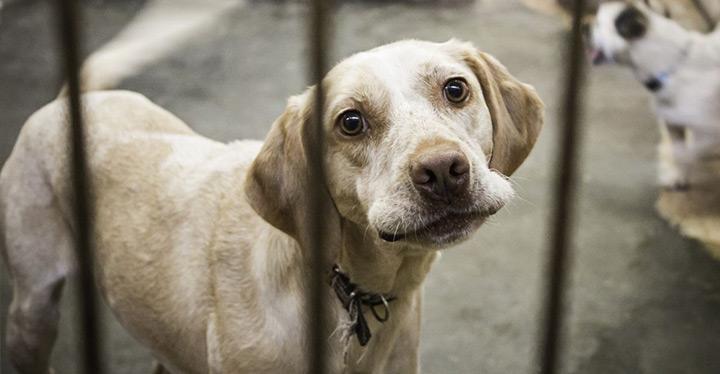 Adoptar un perro de raza pequeño en una protectora de animales.