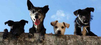 Cómo saber qué perro elegir en una perrera