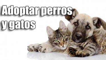 Cómo adoptar un perro pequeño o un gato