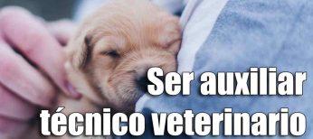 Cursos para trabajar de auxiliar técnico veterinario